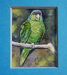 Amazon parrot , miniature painting Peter Häger